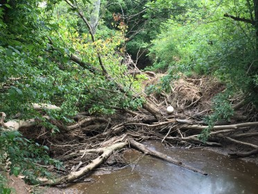 Stream Debris Removal Program